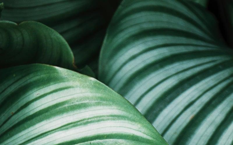 Plakat w Dżungli - detal